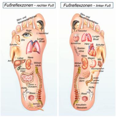 Übersicht der Fußreflexzonen (Copyright Fotolia-Lizenz)