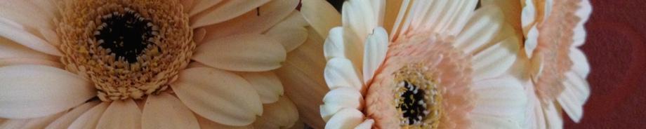 Blumendekoration im Massageraum in Siegburg
